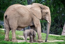 pictures-of-mother-animal-teaching-their-baby-11