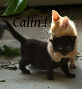 calin_animal_19