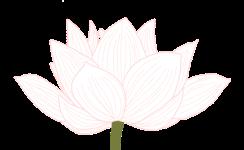 lotus-e1566655218691.png