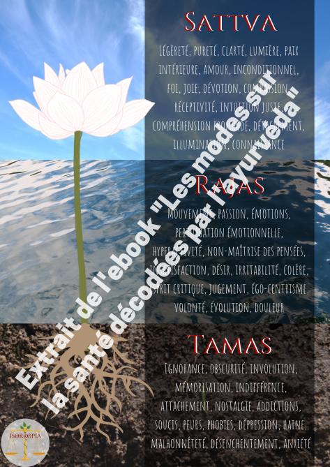 Manas-lotus.png